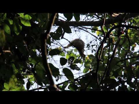 Khao Yai National Park: A Search for Wild Elephants