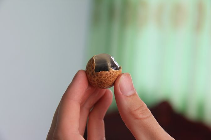 nhan or longan fruit of Vietnam