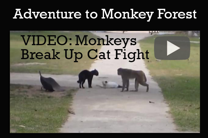 Video and article about budget travel in Monkey Forest, Laos.