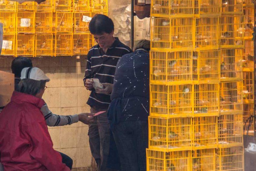 Bird market in Hong Kong